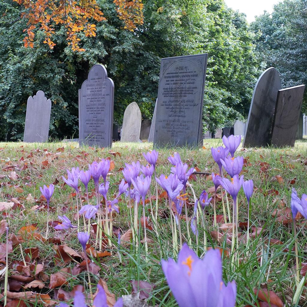 Flowers in Nottingham General Cemetery