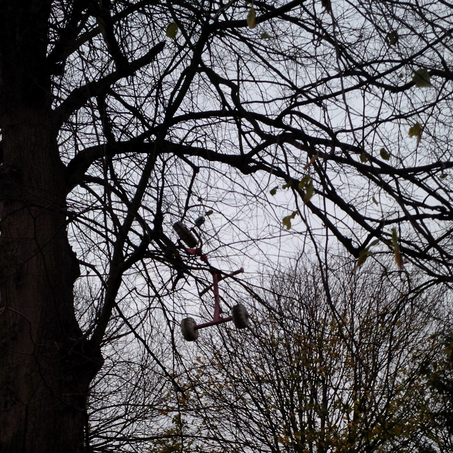 A tricycle in a tree