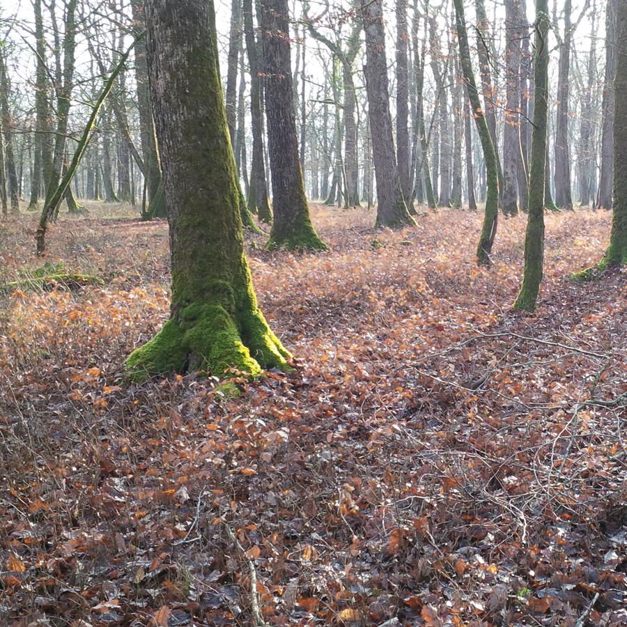 Vittel Forest